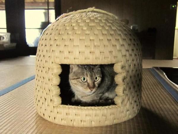 cat013