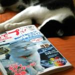 雑誌「ネコでプッ! THE MAGAZINE」(タカハシヒカル)のモデルになって照れるネコ