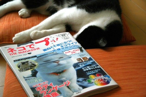 neko-de-pu-the-magazineの画像
