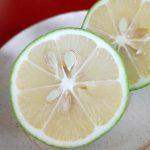 ななほしレモン(稲用レモン園・宮崎県日南市)は穏やかな酸味とほのかな甘みが特徴の激レアレモン。いろいろな料理に活用してみたら、どれもおいしかった!
