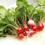 素人が何の知識もなくラディッシュを育てて収穫し、食べるまで~ラディッシュを育てるコツ(適当)