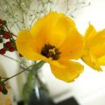 「Tammy Flower(タミーフラワー)」(学芸大学)は種類豊富な街のお花屋さん。特別な日も特別ではない日でも、気分にピッタリあった花がきっと見つかります